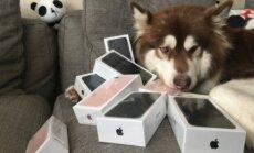 Hiina miljardäri poeg kinkis koerale kaheksa iPhone'i