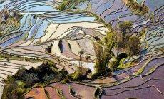 Как выращивают рис в Юго‑Восточной Азии