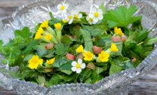 RETSEPTID! Rohelised road metsikutest taimedest - küllaga vitamiine ja värsket energiat