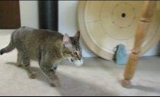 VIDEO: Kel janu, sel jalad! Kiisu lahendab õhtusöögi saamiseks mõistatusi!