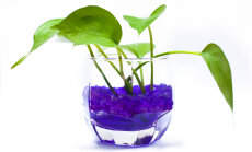 Kasvatage toalilli värvilises kasvusubstraadis
