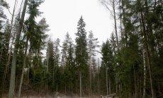 Milline on õiglane hüvitis lendoravaga metsakinnistu eest?