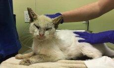Pimedaks peetud kass jahmatab kõiki, kui ta viimaks oma haruldased silmad avab