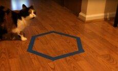 EKSPERIMENT: Proovi oma kassi peal järele, mis juhtub, kui sa põrandale hulknurkse kasti kleebid?