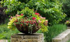 VIDEO: Nii ei eksi sa iial! Kolm võimalust kujundada imelised lilleanumad