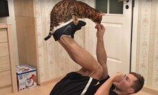 VIDEO: 35 trikki ühe hoobiga! Vaata, milliseid vägevaid trikke teeb see elegantne Bengali kass