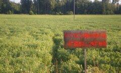 FOTO: Talupidajad keelasid põllult herneste korjamise ära
