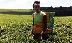 Vabatahtlikuna Keenias: hommikuseks äratajaks kuke kiremine ning piima ja Mala vürtsidega tee