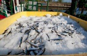 Эстония может увеличить экспорт рыбы на Украину