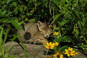 Kassisõbralik ilu- ja köögiviljaaed: millised taimed on ohutud ja millised mitte