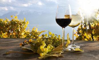 Почему вино в Европе не всюду потечет рекой: непогода загубила много винограда