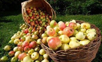 Organic Estonia: Eesti maheeksport elavdaks riigi majandust ja maaelu