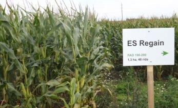 Tootmiskatsed tõestavad: maisil on tulevikku