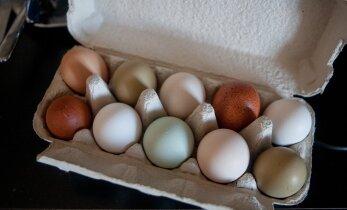 В Вильнюсе забросали яйцами торговое представительство России