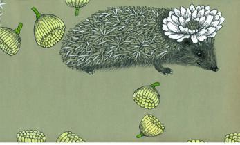Siil ja kaktus