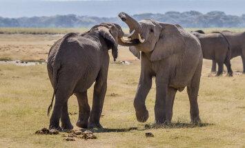 Elevantidel on vinged vanaemad. Vaata, mida nad teevad!