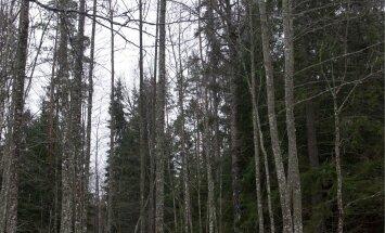 Kes kaitseb metsaomanike õigusi?