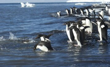 Sündis kokkulepe maailma suurima merekaitseala loomiseks Antarktikas