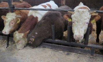 Parimate loomakasvatajate valimine