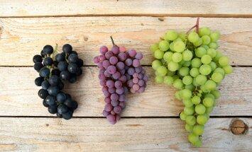 Viinamarjad ja Aafrika taimed