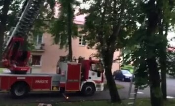 FOTOD ja VIDEO: Päästjad tõid Põhja-Tallinnas kolm päeva puu otsas redutanud kassi alla, omanikust vanadaam oli pisarateni tänulik