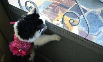 Loomariigi romantikud: tagasihoidlik naabrikass käib juba kaks aastat iga päev oma unistuste kaaslast vaatamas