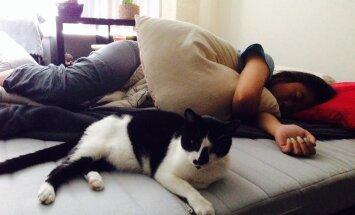 Lemmikloom magamistoas: Kas lemmikloom kaisus toob hea une või on see hoopis kahjulik?