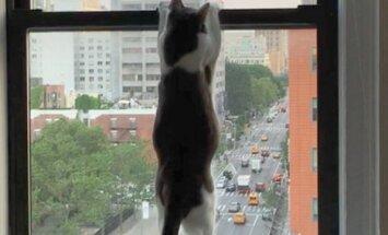 Õnnetu kassipoeg pidi enne 5 kodu läbi käima, kui omale selle õige leidis