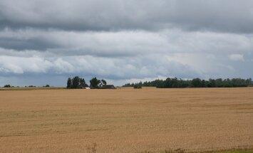 Hiiumaa põllupidajad jooksevad ilmaga võidu