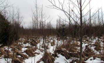 """<a href=""""http://blog.maaleht.ee/leilimetsalood/?p=8979"""" target=""""_blank"""">Leili metsalood: Üheksa aastat pärast lageraiet - võõras käib korra üle, lõikab puud maha, viib kaasa ja rohkem enam ei tule</a>"""