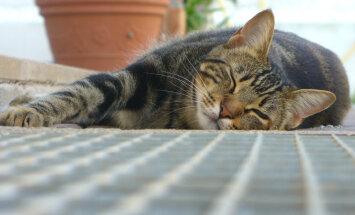 Pane tähele: neli nõksu, kuidas vabaneda laiskusest