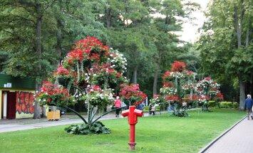 Palanga linnakujunduses annavad tooni tohutud lilleamplid