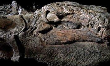 VIDEO: Kanada kaevurid leidsid töö käigus 110 miljoni aasta vanuse haruldase ja enneolematult hästi säilinud leiu