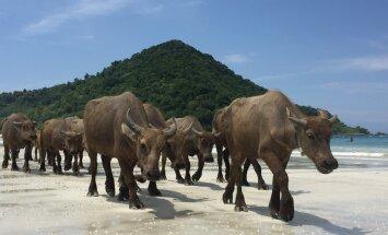 VÄGA OLULINE | Mida peaksid Aasiasse reisides kindlasti teadma?