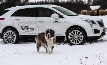 PROOVISÕIT: Cadillac XT5 - vaielda võib maitse, aga mitte selle auto võimekuse üle!