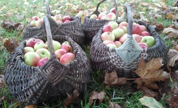 Eriti viljakas õuna-aasta soosib talveks head tervist