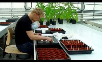На Марсе впервые вырастили помидоры