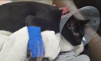Kassiomanik hoiatab: ärge korrake viga, mis pani ohtu minu kassi elu