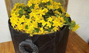 Nahast vakk sobib hästi panipaigaks, kuid sinna võib suurema veekindla anumaga paigutada ka lilli.