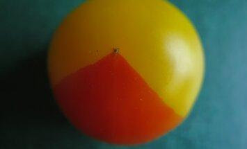Tomat nagu diagramm