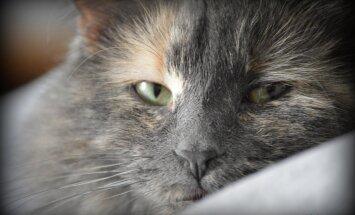 Lihtsad nipid, kuidas kassi palaval suvepäeval jahutada