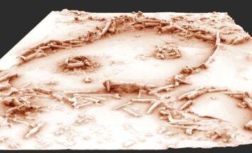 Neandertallased rajasid oma koobastes maa-aluseid kiviringe