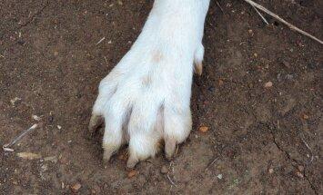 Miks koerad pärast häda tegemist maapinda kraabivad? Kas see on märk halvasti käituvast koerast?