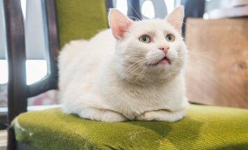 Kass Kasper