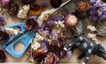 NIPP: Milliseid lilli kuivatada, kuidas ja miks?