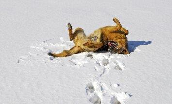 8 nippi: mida talvel oma lemmiku eest hoolitsemisel silmas pidada?