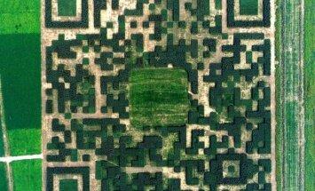 В китайской деревне появился огромный QR-код из деревьев
