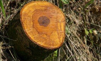 Ebaseaduslik metsaraie Pirita ürgorus