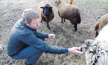 Aed, mille dekoratsiooniks on põllutehnika ja lambad