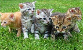 12 populaarset küsimust, mida omanikud kassipoegade kohta sageli küsivad